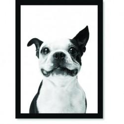 Quadro Poster Animais Cachorro 1
