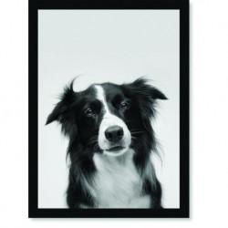 Quadro Poster Animais Cachorro 2