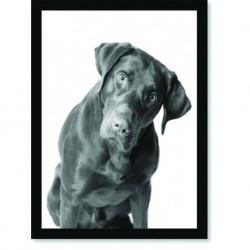 Quadro Poster Animais Cachorro 3