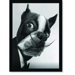 Quadro Poster Animais Cachorro Salvador Dali