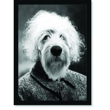 Quadro Poster Animais Cachorro Ainstein