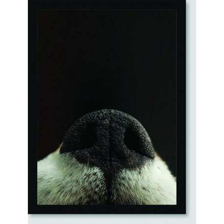 Quadro Poster Animais Focinho Cachorro