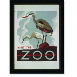 Quadro Poster Natureza Visit the Zoo