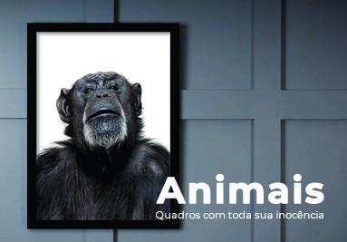 Coleção Animais